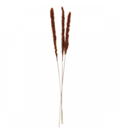 copy of DRIED FLOWERS